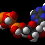 生体エネルギーの通貨「ATP」①
