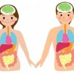 腸のお話(腸は第2の脳)